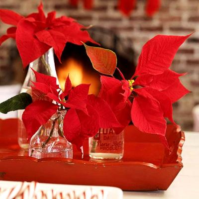 Poinsettia: Photo from Better Homes & Gardens