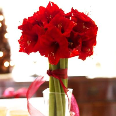Amaryllis: Photo from Better Homes & Gardens